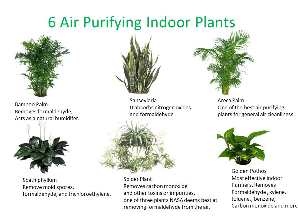 Three Essential Houseplants For Clean Indoor Air. [Kamal