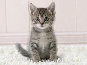 sidebox-kitten-thinks-r