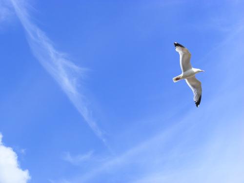 nature-bird-flying-sky-blue