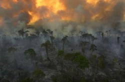 Amazon rainforest clear-cut and burned for soybean farming