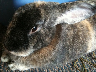 Fritter the bunny