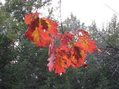 Fall foliage at Kripalu