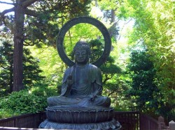 buddha-statue-in-forest