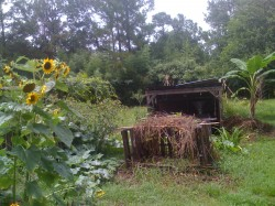 Sunflowers and shelters