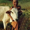 Yoga and Dairy: An Alliance of Holy or Unholy Cows?