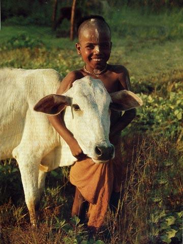 Do Indian Drink Cow Milk