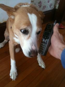 Dog Answers Phone