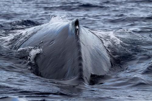 gliding whale, dianerupnowphotography.com