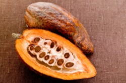 cocoabean3