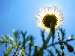 in the shadow of a sunflower by Hamed Saber courtesy FlickrCC