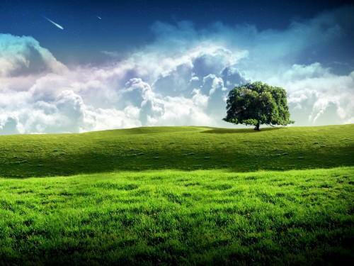 new_bliss_tree_green_landscape_scenery_wallpaper