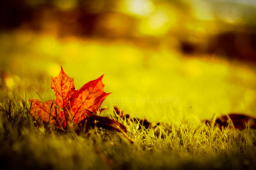 Fall Leaf by Munira