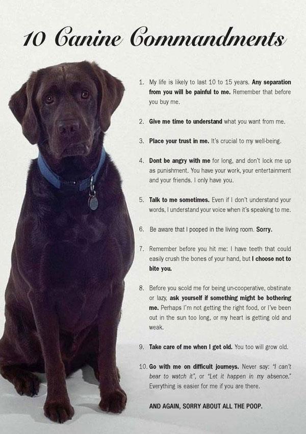 10 commandments of pooch dog
