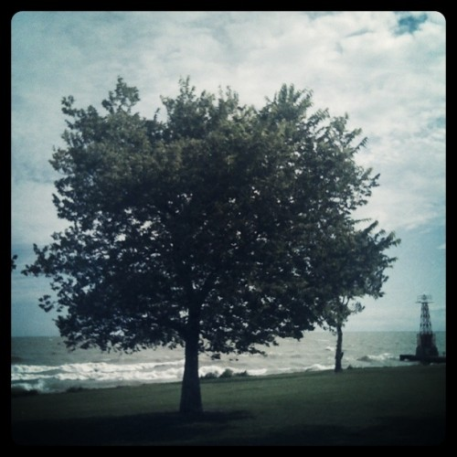 A Single Tree on the Chicago Lakefront by Marlene Kelly