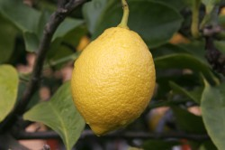 Lemon-Headache-Nutrition