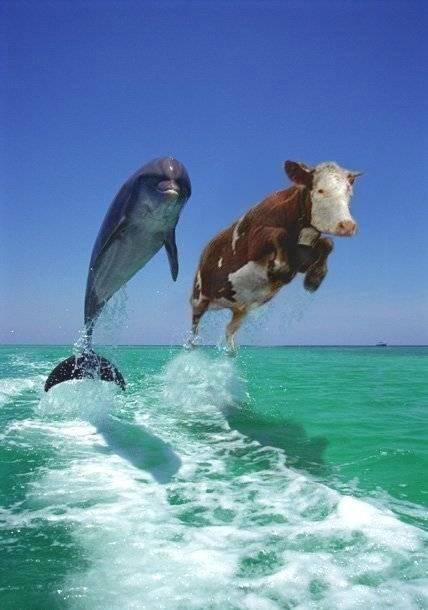 dolphinstresstest