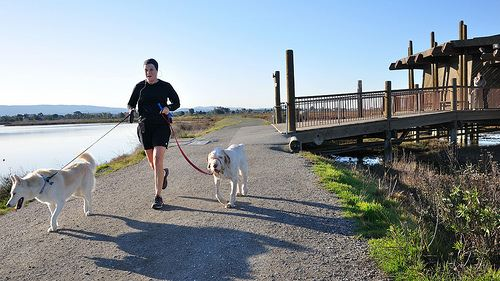 Jogging with the dogs at the Palo Alto Baylands