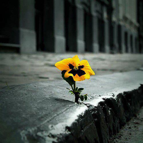 Flower in concrete