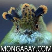 http://mongabay.com/