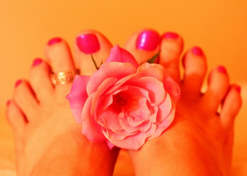Woman's Feet Holding Pink Rose Fresh Pedicure