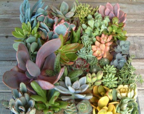 http://www.greenbrideguide.com/content/sophistication-succulents