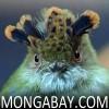 mongabay.com logo
