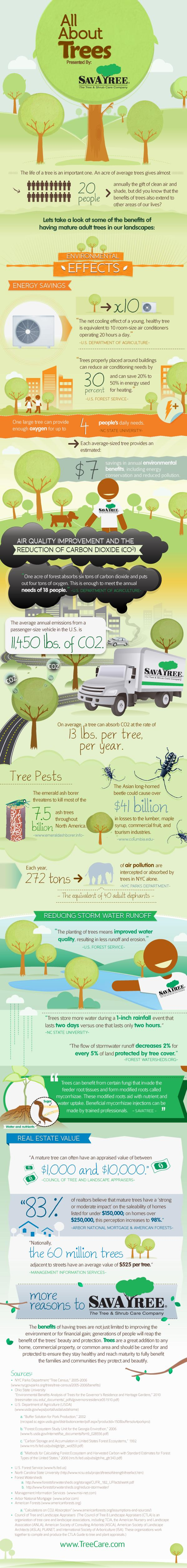 """""""The net cooling effect of a young, healthy tree is equivalent to 10 room-size air conditioners operating 20 hours a day."""" -U.S. Department of Agriculture """"Trees properly placed around buildings can reduce air conditioning needs by 30 percent and can save 20% to 50% in energy used for heating."""" – U.S. Forest Service"""