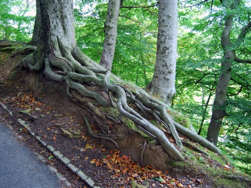 Move from co-dependent to thriving by learning how trees work naturally.
