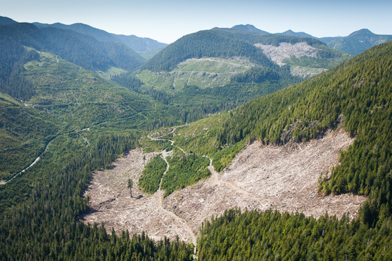 An aerial view taken over a recent clearcut located within the last 4percent of valley bottom old-growth that remains on southern Vancouver Island. Photo by: T.J. Watt, Utopia Photo.