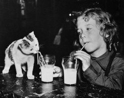 Drinking milk (from pinterest... do not re-use unless you use embed code below)