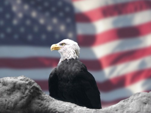 Eagle_and_American_Flag_by_Bubbels