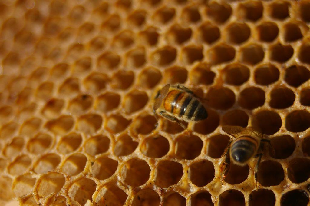 how to detect fake honey