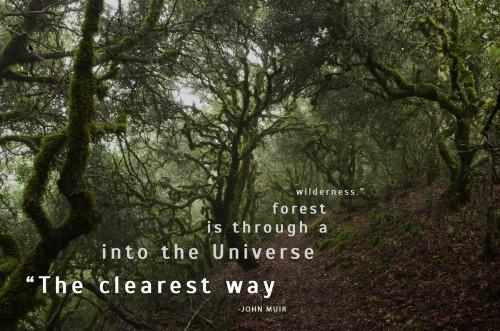 Muir Woods San francisco California
