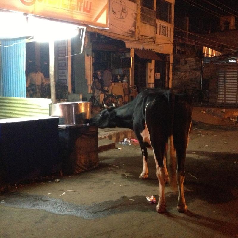 The biggest cow in Cidambaram (photo-SHR.com)