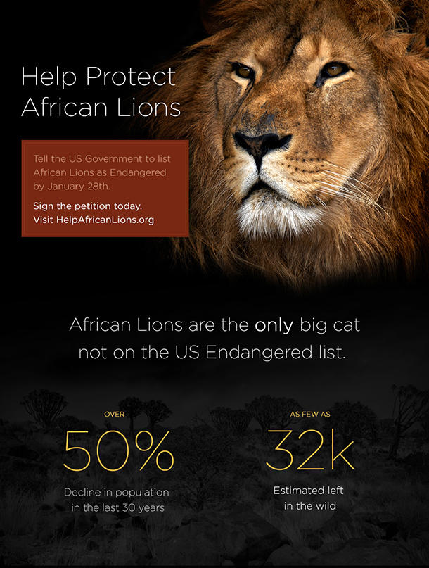 Lions_II_web_upper