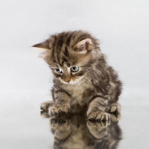 Mirror cat