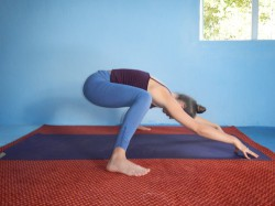 DSCN8133-Prasarita Padottanasana Kriya, Standing Wide Legged Forward Bend Hip Clearing (bent knees)
