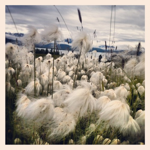 Kilcher Homestead in Homer, Alaska.  ~ Kate  Lomac-MacNair