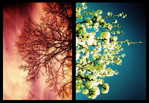 winter to spring (not for reuse--from pinterest)