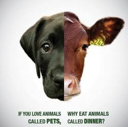 food vs. pet