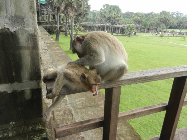 monkey grooming photo by Brian Holihan