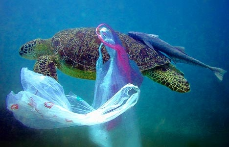 plastic ocean sea turtles