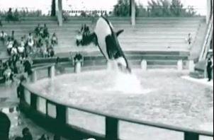 orca at sequarium