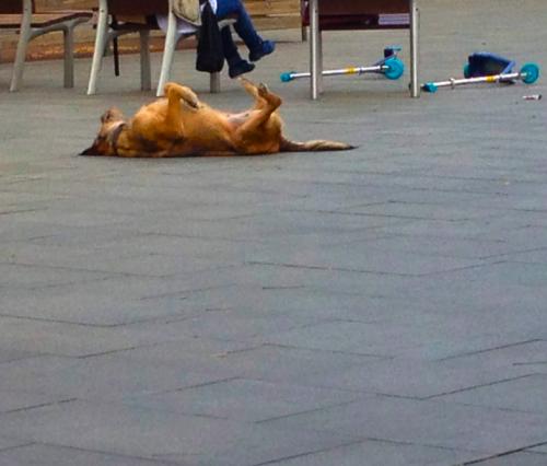 Watching a Dog in Plaça del Sol, Gràcia, SHR.com