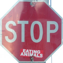 stop eating animals