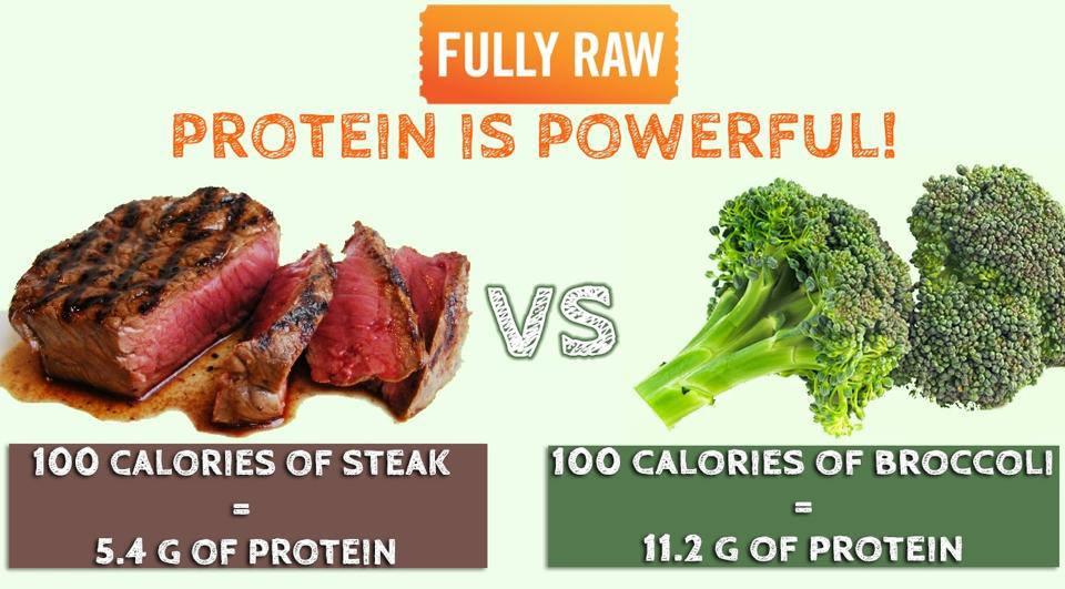 vegetarian vs meat eater essay