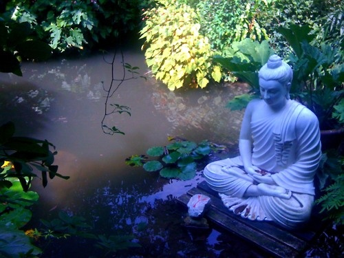 buddha healing garden