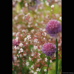 6_Gem_Salsberg_All_Rights_Reserved_Daphnes_Garden_Flowers_RV_LR_2_8138