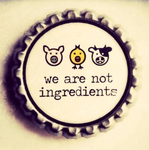not ingredients