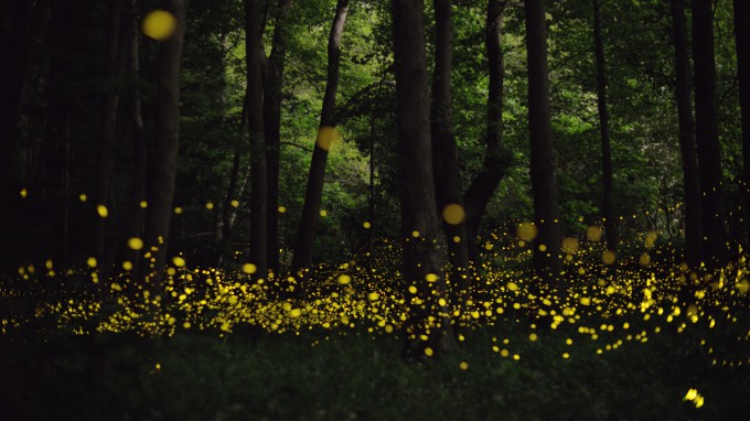 Fireflies Make the Summer Magical. ~ Dejah Beauchamp ...